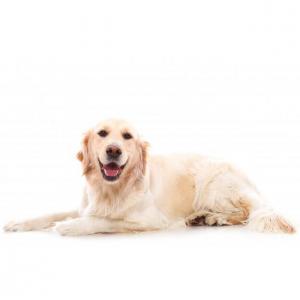 7个加拿大购买宠物用品、宠物药品的网站推荐(附最新优惠+10%返利)