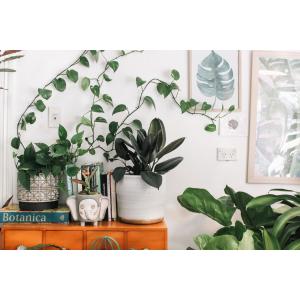 2021美国购买室内外绿植、花卉、花盆的网站推荐(附优惠码+10%返利)