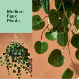 Hilton Carter & Target offers - faux & live plants & accessories,