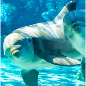 Up to 35% off SeaWorld San Diego tickets @Sea World