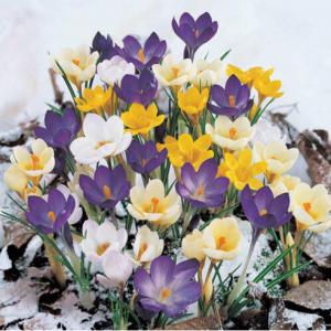 Breck's 季末大促 收牡丹、郁金香、鸢尾花、百合花、铁线莲等超多精美花花