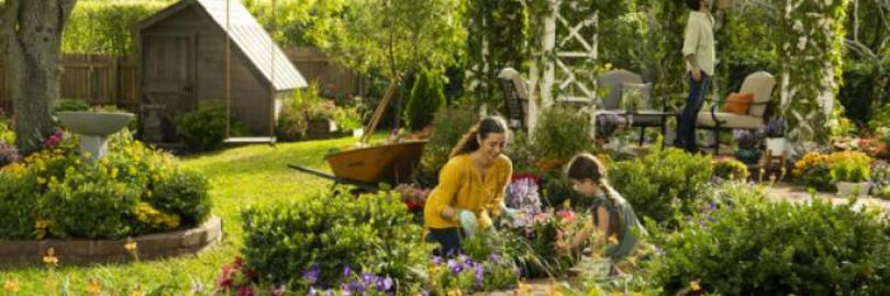 2021美国室内外植物及盆栽推荐(附购买网站/绿植店)- 易照顾、又美观!