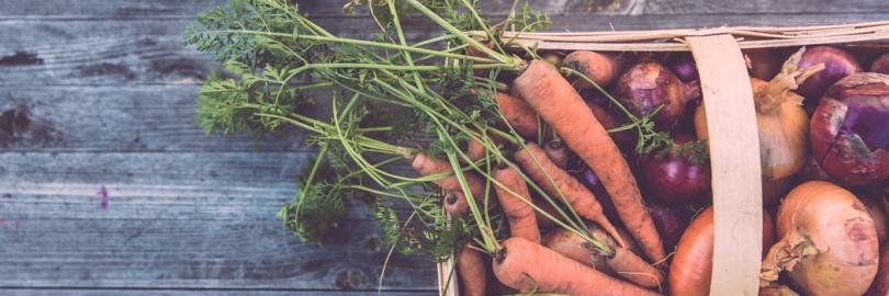 2021最全加拿大种菜攻略(种菜时间表+种子+土壤+肥料+购买网站)- 温哥华、多伦多后院种菜指南!